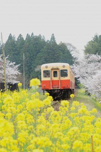 小湊鉄道のキハ200