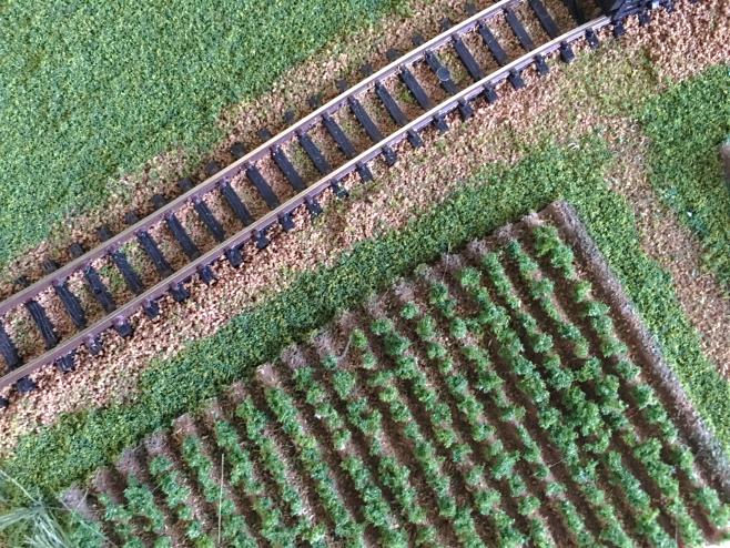 ニンジン畑を植えから見てみます。既に別な作業をおこなっているため、いろいろとゴミが…。