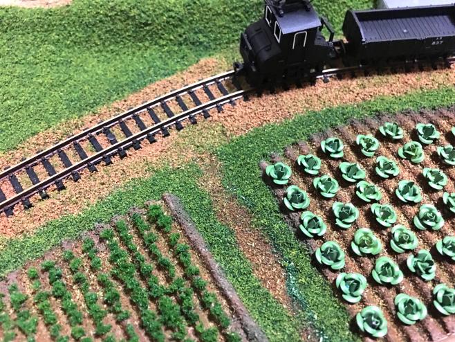 左がニンジン畑で、そのとなりがキャベツ畑です。こんなキャベツ畑が簡単に作れたら良いと思いませんか?