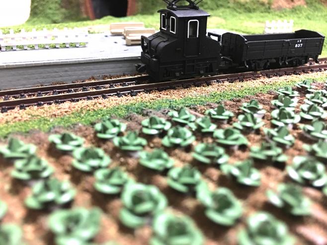 キャベツ畑を走る銚子電鉄デキ3です。ローアングルからでもこのとおり、誰がなんと言おうと「キャベツ」です!
