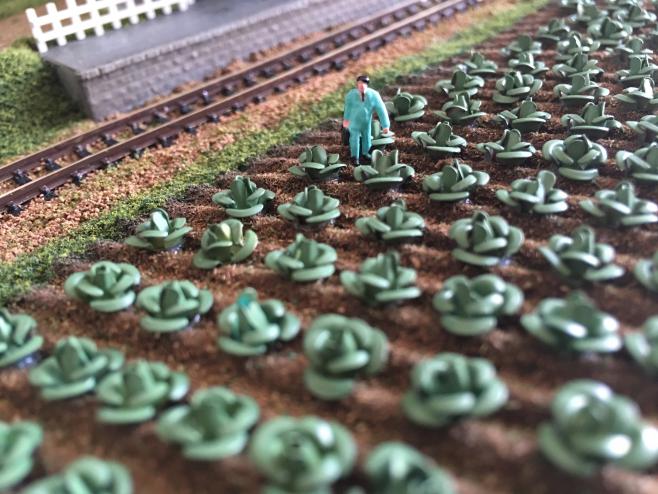 銚子電鉄を撮影するために無断で畑に侵入したわけではありません。出勤前に自分のキャベツの状態を確認しています。